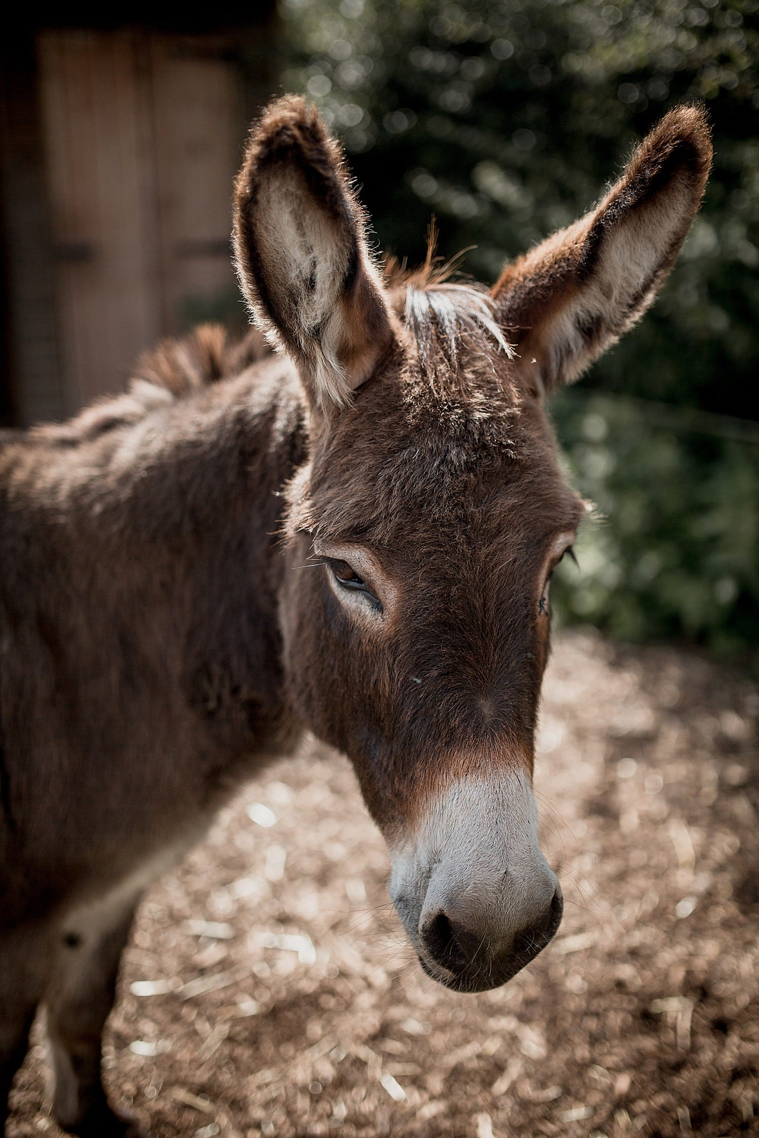 donkey at buddileigh farm