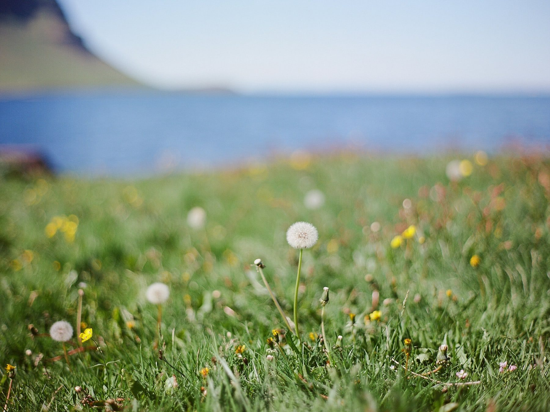 StarlingandSage_Iceland_Wedding_50